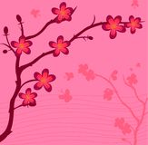 gałęziasta roślina Zdjęcie Royalty Free