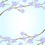gałęziasta roślina Obraz Royalty Free