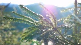 Gałęziasta słońca światła natura zdjęcie wideo