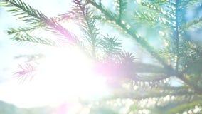Gałęziasta słońca światła natura zbiory