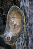 Gałęziasta sekcja drzewo zdjęcia stock