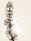 gałęziasta wiśnia rysująca ręka Obrazy Royalty Free