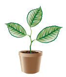 gałęziasta zieleń r Obrazy Royalty Free