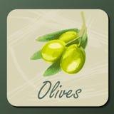 gałęziasta zielona oliwka Zdjęcia Royalty Free