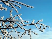 gałęziasta zimy. Zdjęcia Royalty Free