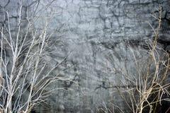 Gałęziaste drzewo rośliny i ścienny ogrodnictwo tekstur tło zdjęcia royalty free