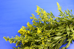 gałęziaste mimozy zdjęcie stock
