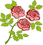 gałęziaste trzy różowe róże Zdjęcie Stock