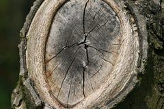 gałęziastego cięcia adry drzewo Zdjęcie Stock