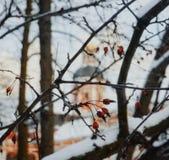 gałęziastej drzewnej czerwonej jagody zimy dnia architektury outdoors śnieżny zimny niebo Obrazy Royalty Free