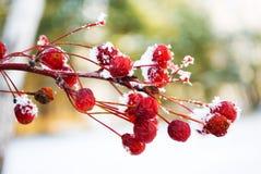 gałęziasty śnieg obraz stock