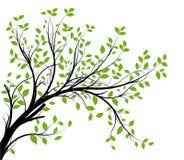 gałęziasty dekoracyjny wektor Zdjęcie Royalty Free