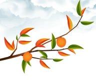 gałęziasty drzewo Obrazy Royalty Free