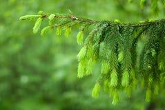 gałęziasty drzewo Zdjęcia Stock