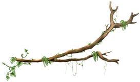gałęziasty drzewo Fotografia Stock