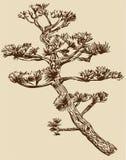 gałęziasty drzewo ilustracji