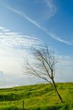 Gałęziasty drzewo na halnym skłonie z nieba tłem. Obrazy Royalty Free