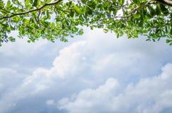Gałęziasty drzewo zieleni liścia i chmury niebieskiego nieba tło Zdjęcia Royalty Free