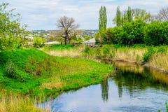 gałęziasty jaskrawy kwiecenia zieleni natury wiosna drzewo Zdjęcia Stock