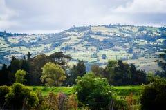 gałęziasty jaskrawy kwiecenia zieleni natury wiosna drzewo Piękny krajobraz Park z Zieloną trawą i Tr Obraz Stock
