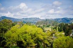 gałęziasty jaskrawy kwiecenia zieleni natury wiosna drzewo Piękny krajobraz Park z Zieloną trawą i Tr Zdjęcia Royalty Free