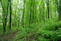 gałęziasty jaskrawy kwiecenia zieleni natury wiosna drzewo trawy zieleni parka drzewa Zdjęcie Stock