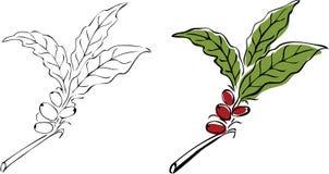 gałęziasty kawowy drzewo ilustracji