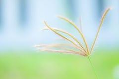 Gałęziasty kwiat i zamazany tło Zdjęcia Stock