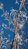 gałęziasty mroźny Fotografia Stock