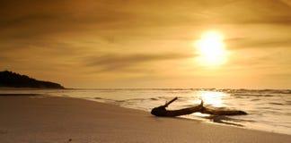 gałęziasty osamotniony morze rzucający out Zdjęcia Stock