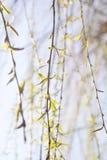 gałęzie drzewa fotografia stock
