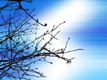 gałęzie drzewa royalty ilustracja