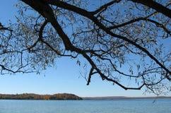 gałęzie drzewa Fotografia Royalty Free