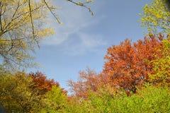 gałęzie drzewa Obrazy Royalty Free