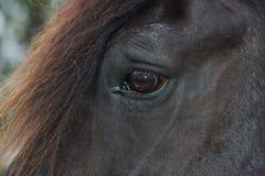 Öga av en svart Percheron utkasthäst Royaltyfri Fotografi