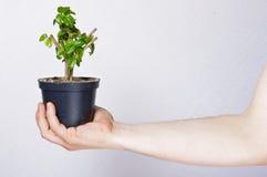 Ga groen concept Royalty-vrije Stock Foto