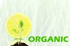 Ga het groene organische concept van de Aardecologie royalty-vrije illustratie
