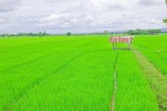 Ga wind bij de rijstlandbouwgrond op vakantie Royalty-vrije Stock Foto's