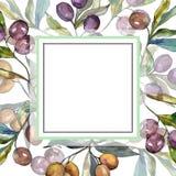 Ga??zka oliwna z czerni i zieleni owoc Akwareli t?a ilustracji set Ramowy rabatowy ornamentu kwadrat ilustracji