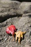 Gaat in de herfst weg royalty-vrije stock fotografie