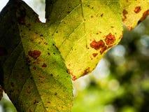 Gaat in de herfst weg dat aan de grond op het punt staat te vallen stock afbeelding