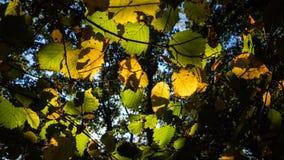Gaat in de herfst weg dat aan de grond op het punt staat te vallen royalty-vrije stock foto's