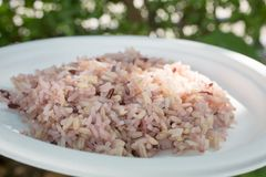 Gaba rice in a dish made of recycled material The background is green lawn. Soft focus stock photo