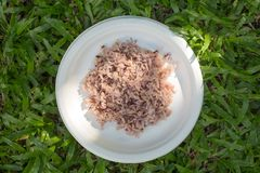 Gaba rice in a dish made of recycled material The background is green lawn. Soft focus royalty free stock photos