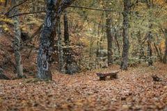 Gabarits en bois vides en parc d'automne photographie stock