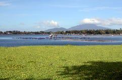 Gabbia del pesce del lago in pieno della questione ambientale delle ninfee che confronta piscicoltura Immagine Stock Libera da Diritti