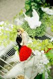 Gabbia della colomba con le figurine di nozze Fotografia Stock