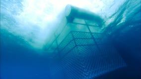 Gabbia dello squalo stock footage