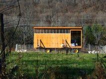 Gabbia di pollo mobile Fotografia Stock