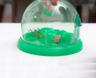 Gabbia o insectarium dell'insetto, fatto dalla trasparenza di plastica con il mA immagine stock libera da diritti